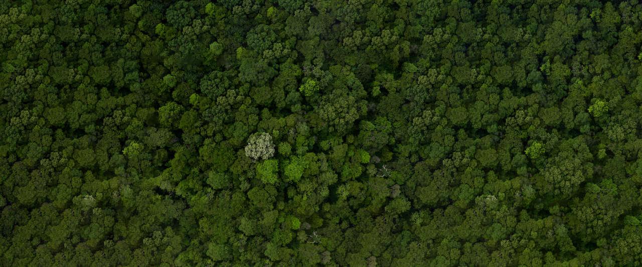 Scanforest - lidar forêt